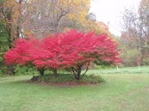 felrode_bomen