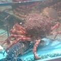 Seafood_in_Quimper